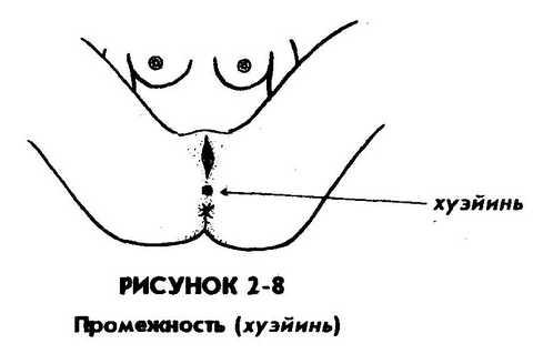 skolko-santimetrov-rasstoyanie-mezhdu-anusom-i-vlagalishem