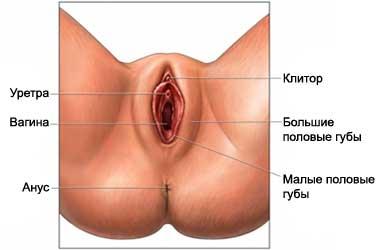 porno-trahnul-v-korotkom-plate