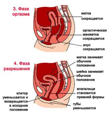 zhenskiy-orgazm-stadii