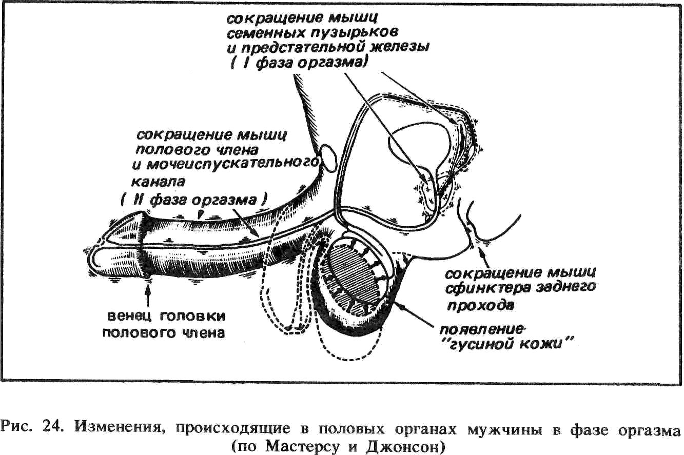 skolko-zhivut-spermatozoidi-posle-eyakulyatsii