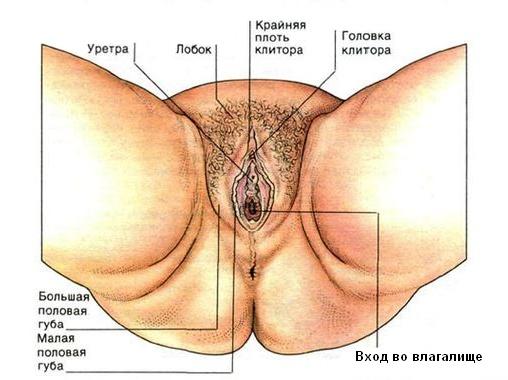 mesto-raspolozheniya-klitora-v-pizde-muzhchini-delayut-kunilingus-polnim-seks-bombami