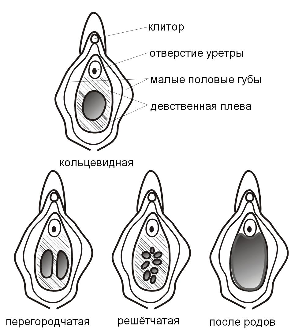 formi-pisek