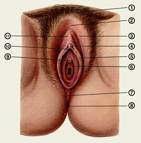 kakie-klitori-u-zhenshin